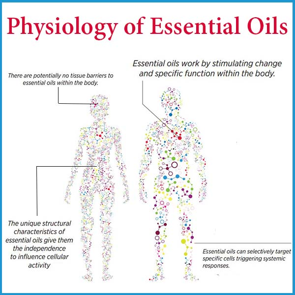 physiology of EOs
